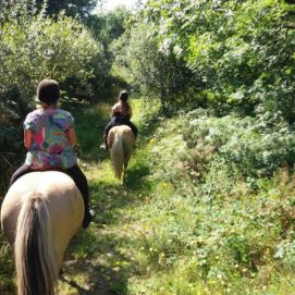 Horse and Pony Trekking